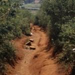 A path in Ugari.