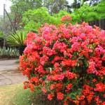 Blumen für Mama (zum Geburtstag gibt's einen Busch deiner Lieblingsblumen:-) )